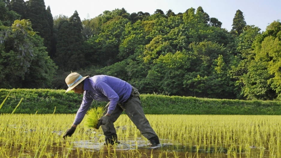 JAPAN – AN AGRIC NATION THRIVING DESPITE THE ODDS