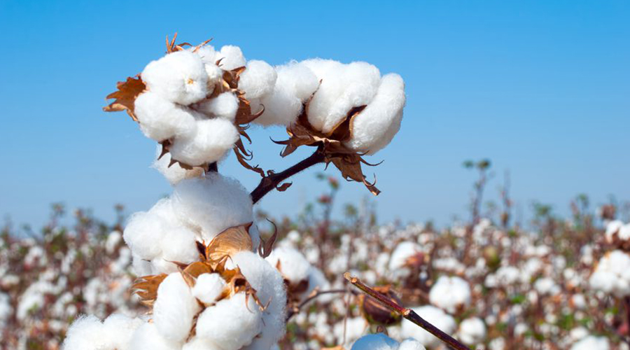 IT'S TIME TO RESUSCITATE DORMANT COTTON SUB-SECTOR