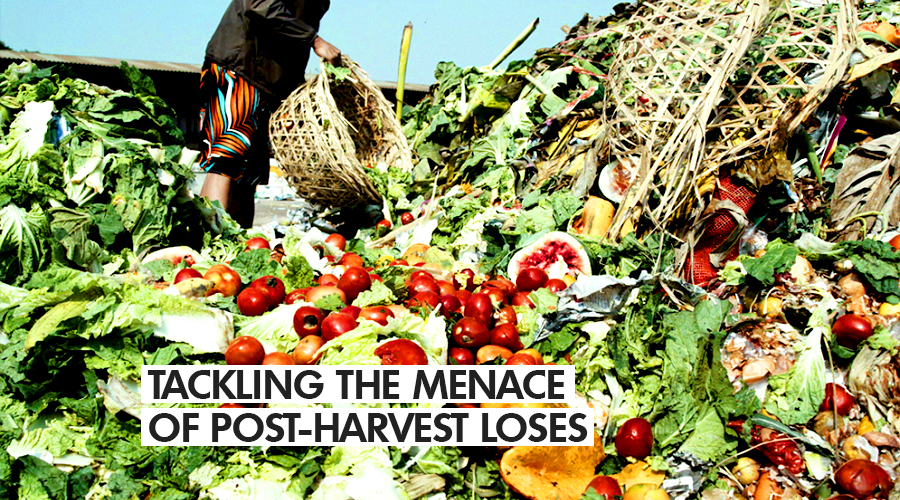 TACKLING THE MENACE OF POST-HARVEST LOSES