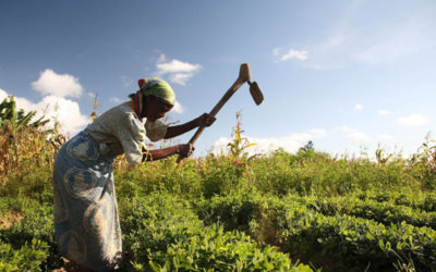BREAKING THE 'GRASS CEILING': EMPOWERING WOMEN FARMERS